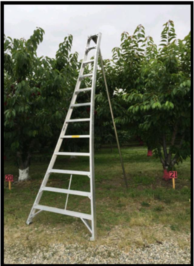 Where to find LADDER, ORCHARD in Hayden